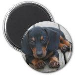 Dachshund Puppy Black 2 Inch Round Magnet