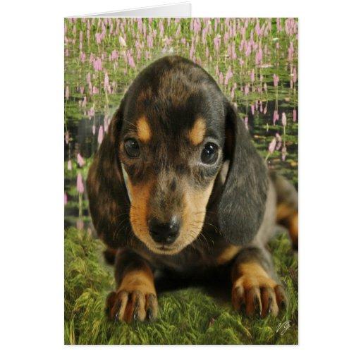 Dachshund Puppy (Black/Grey) on the Lake Card