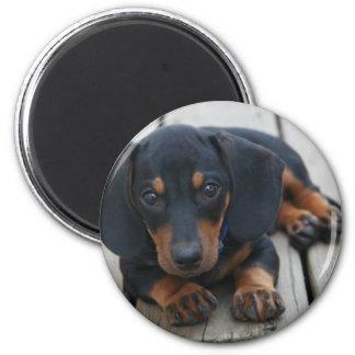 Dachshund Puppy Black Magnet