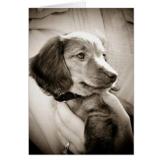 Dachshund puppy card