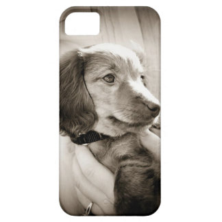 Dachshund puppy case iPhone 5 case