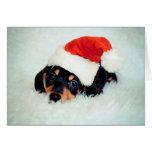 Dachshund Puppy Christmas Greeting Cards