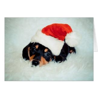 Dachshund Puppy Christmas