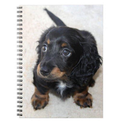 Dachshund puppy cute cute beautiful photo, gift notebook
