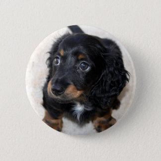Dachshund puppy dog cute beautiful photo, gift button