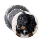 Dachshund puppy dog cute beautiful photo, gift buttons