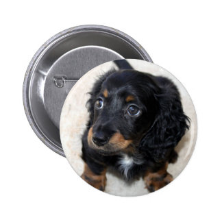 Dachshund puppy dog cute beautiful photo, gift button