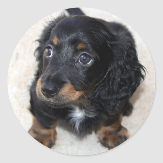 Dachshund puppy dog cute beautiful photo, gift classic round sticker