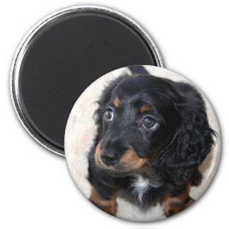 Dachshund puppy dog cute beautiful photo, gift 2 inch round magnet
