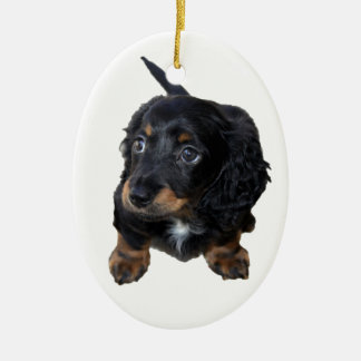 Dachshund puppy dog cute beautiful photo, gift christmas ornament