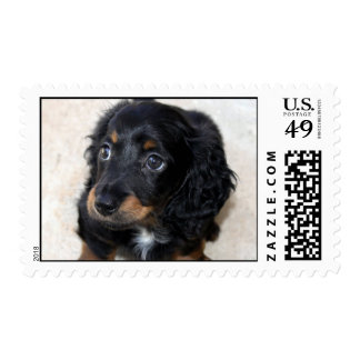 Dachshund puppy dog cute beautiful photo postage