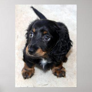 Dachshund puppy dog cute beautiful photo, print