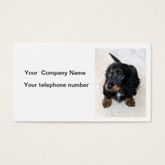 Dachshund puppy dog cute photo business card