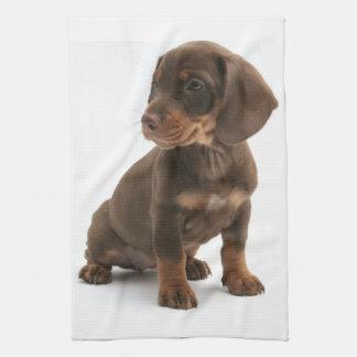 Dachshund Puppy Kitchen Towel