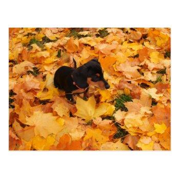 Dachshund Puppy Postcard by Artnmore at Zazzle