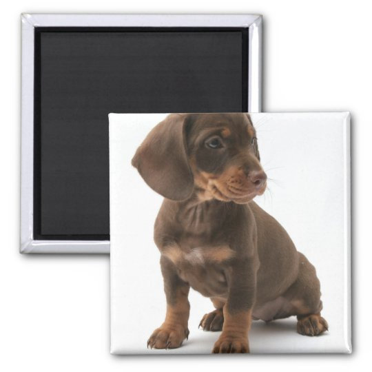 Dachshund Puppy Square Magnet