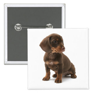 Dachshund Puppy Square Pin