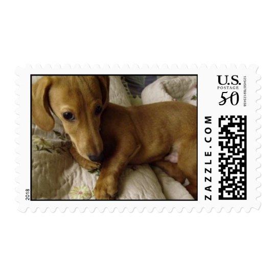 Dachshund Puppy Stamp - Small size