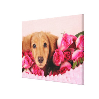Dachshund Puppy Surrounded by Roses Canvas Print