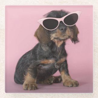 Dachshund puppy wearing sunglasses glass coaster