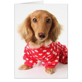 Dachshund Puppy Wearing Valentine's Outfit Card