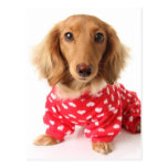 Dachshund Puppy Wearing Valentine's Outfit Postcard