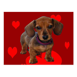 DACHSHUND Puppy with Hearts Postcard