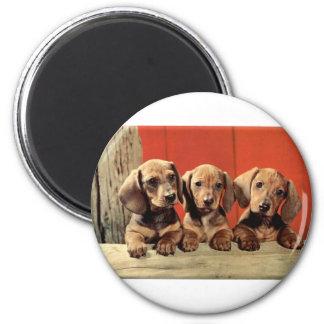 Dachshund Puppy's Fridge Magnets