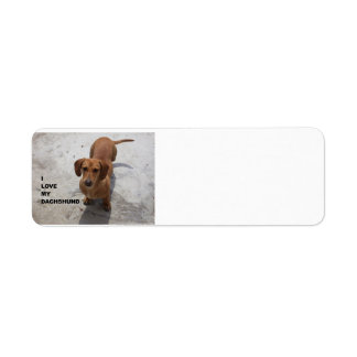 dachshund red full love w pic label