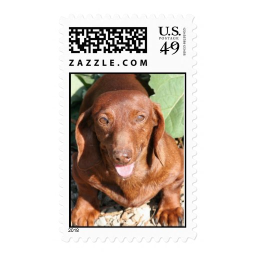 Dachshund Red Smooth Stamps