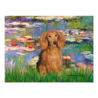 Dachshund (sable long haired) - Lilies 2 Poster