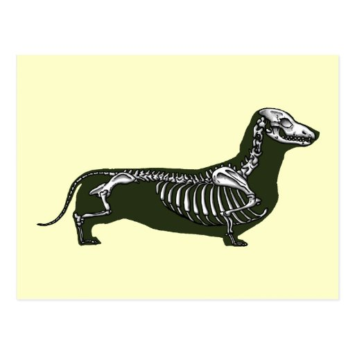 dachshund skeleton postcard