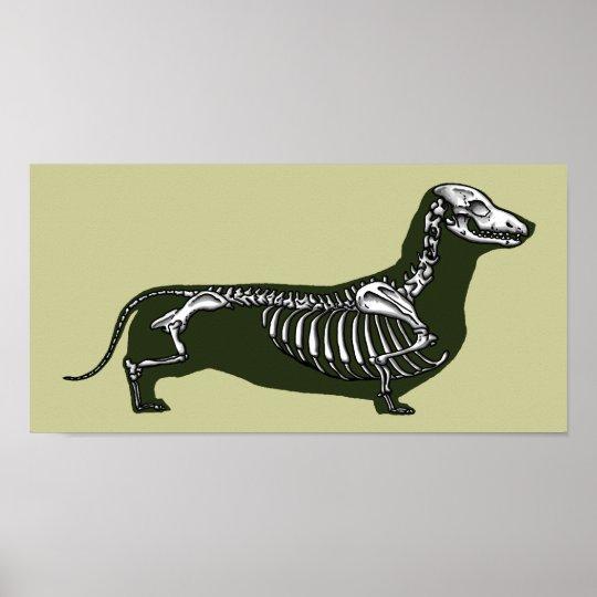 dachshund skeleton poster