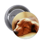 Dachshund sleeping pinback buttons