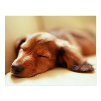 Dachshund sleeping postcard