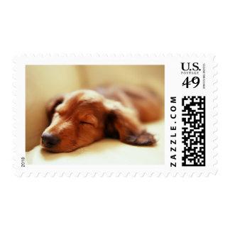 Dachshund sleeping stamps