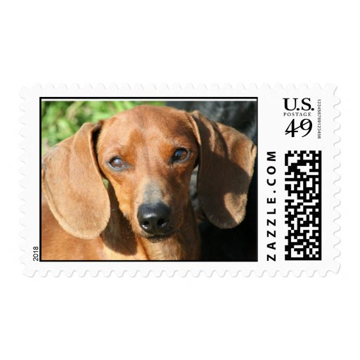Dachshund Smooth Coat Red Postage