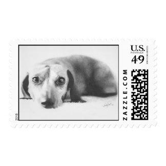 Dachshund Stamp