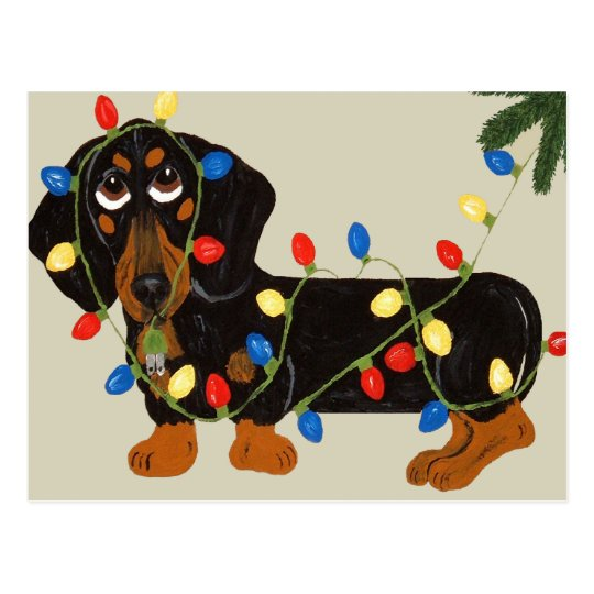 Dachshund Tangled In Christmas Lights Blk/Tan Postcard