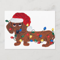 Dachshund Tangled In Christmas Lights (Red) Holiday Postcard