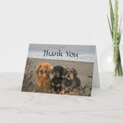 thank you dachshund