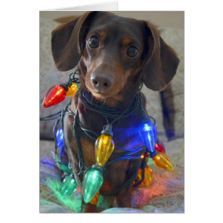 Dachshund tonto enredado en luces de navidad tarjeta de felicitación