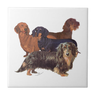 Dachshund Varieties Small Square Tile