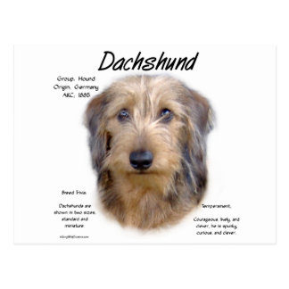 Dachshund (wirehair) History Design Postcards