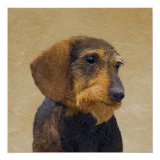 Dachshund (Wirehaired) Poster