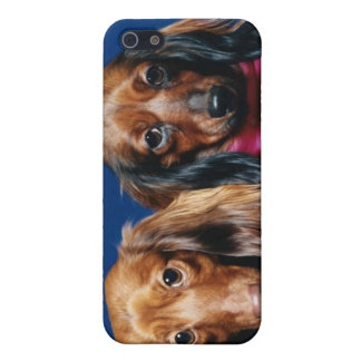 Dachshunds Cover For iPhone SE/5/5s