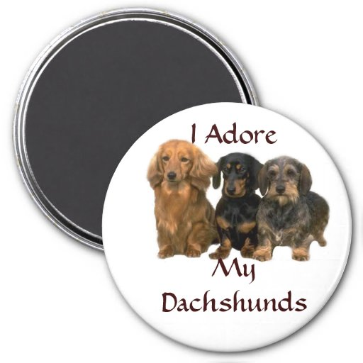 Dachshunds I Adore Magnet