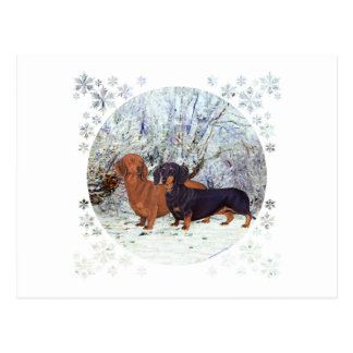 Dachshunds in the Snow Postcards