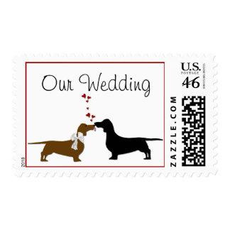 Dachshunds que casan sellos