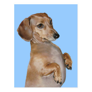 Dachshunds Rock Lilly Post Cards